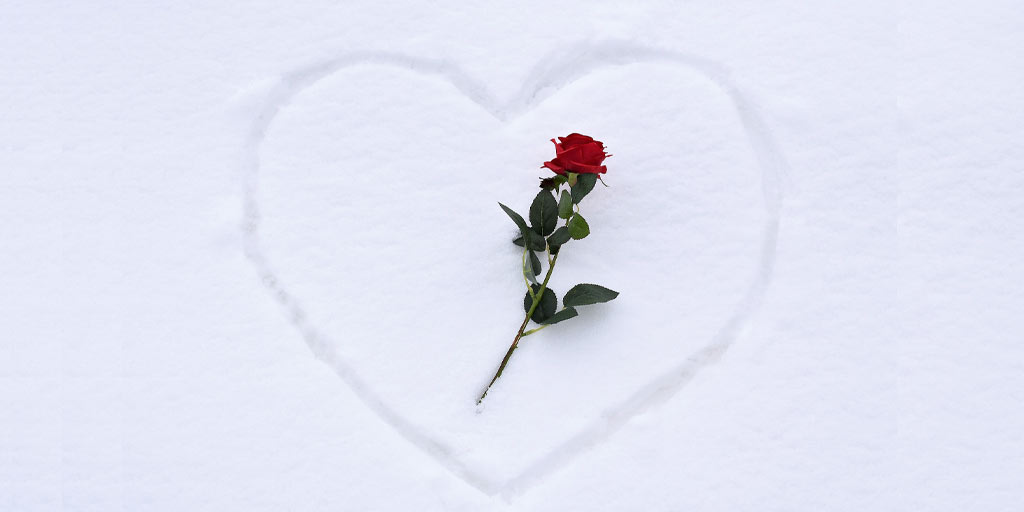 Flower Cold Chain Logistics Make Valentine's Day Roses Possible